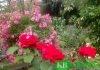 Dael-Garten